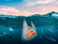 Plastic Pollution Affects Marine Life