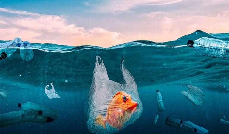 How Plastic Pollution Affects Marine Life?